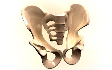 Digital illustration  of pelvic girdle in    colour background   Stock Illustration - 23491649