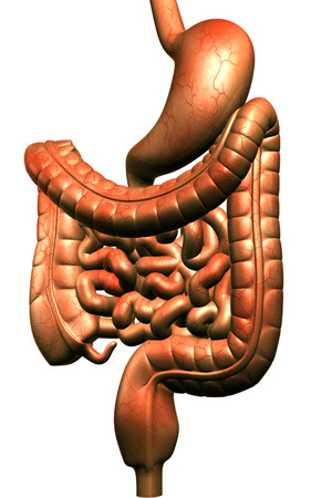 Digital illustration of human digestive system in colour background  Stock Illustration - 24064057