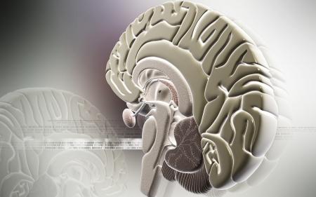hypothalamus: Digital illustration of  brain in colour  background   Stock Photo