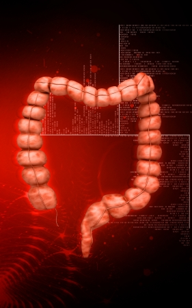small bowel: Digital illustration of  Intestine in colour  background