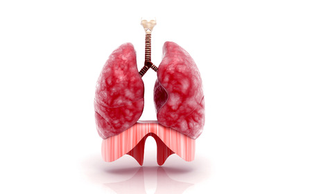 pulmones: Digital illustration of human lungs Stock Photo