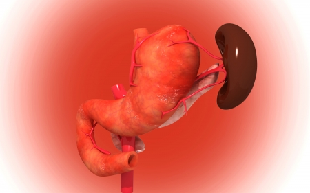 Digital illustration of  pancreas and spleen  in colour  background Stock Illustration - 24140795