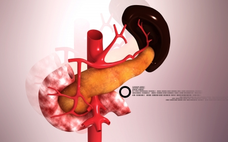Digital illustration of  pancreas and spleen  in colour  background Stock Illustration - 24140798