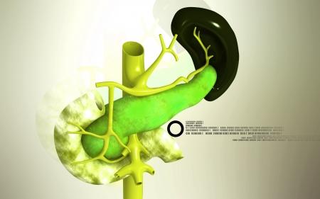 Digitální ilustrace slinivky břišní a sleziny v barvě pozadí