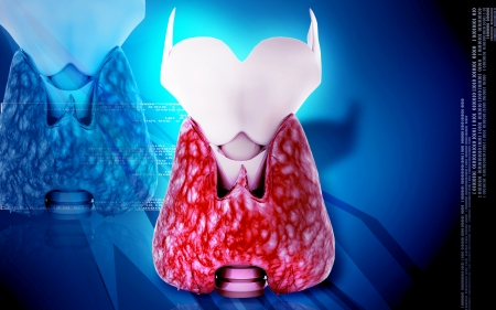 epiglottis: Digital illustration of  thyroid in colour     Stock Photo