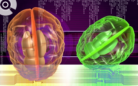 medulla oblongata: Digital illustration of  brain in color