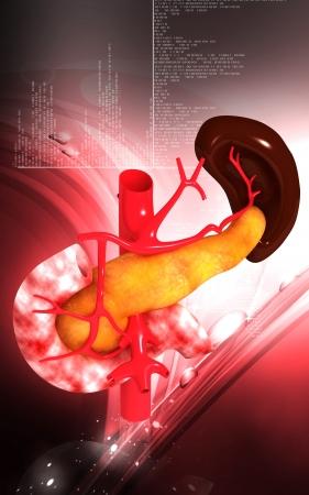Digital illustration of  pancreas and spleen  in colour  background Stock Illustration - 24394503