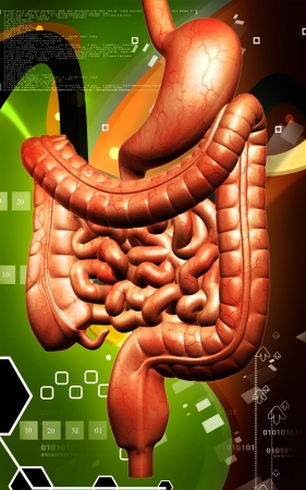 Digital illustration of human digestive system in colour background  Stock Illustration - 24536989