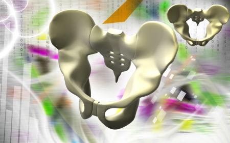 Digital illustration  of pelvic girdle Stock Illustration - 24631657