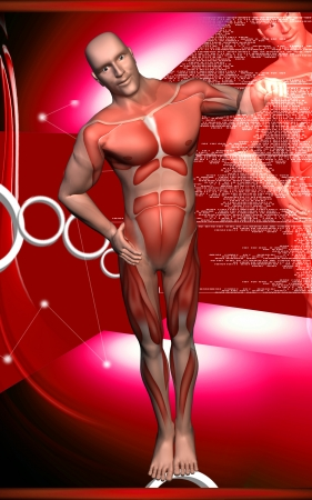 human body: Digital illustration of  human body
