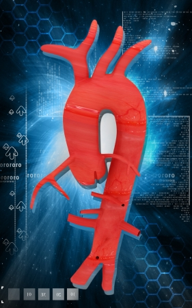 Digital illustration of  Aorta Stock Photo