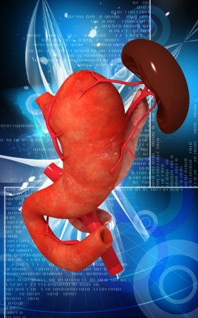 Digital illustration of  pancreas and spleen  in colour  background Stock Illustration - 24751656