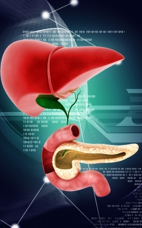 cystic duct: Digital illustration of  Pancreas and Liver in colour  background  Stock Photo