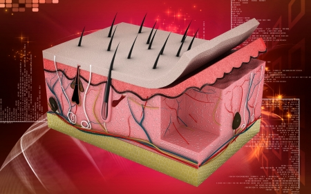Digital illustration of Skin in colour background illustration