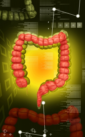 Digital illustration of  Intestine in colour   Stock Illustration - 24991738