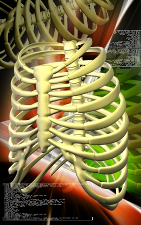 Digital illustration of  rib cage  in colour  background  illustration