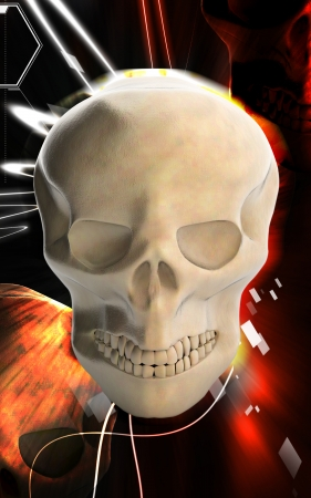 Digital illustration of  Human skull  in  colour background