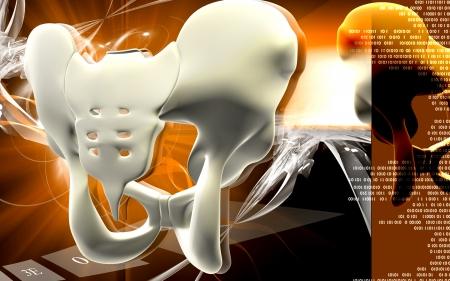 Pelvic girdle Digital illustration  of pelvic girdle in    colour background