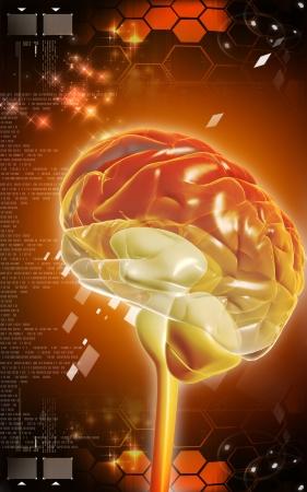 Digital illustration of  brain in colour  background   Stock Photo