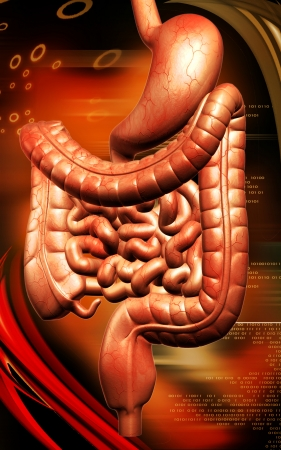 Digital illustration of human digestive system in colour background  Stock Illustration - 25204762