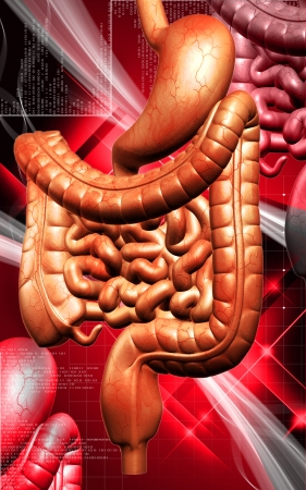 Digital illustration of human digestive system in colour background  Stock Illustration - 25204676