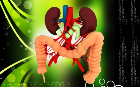 Digital illustration of  Intestine in colour  background Stock Illustration - 25394929