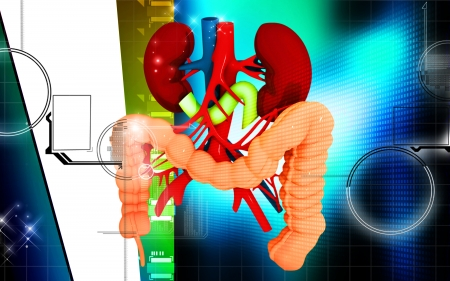 human internal organ: Digital illustration of  Intestine in colour  background