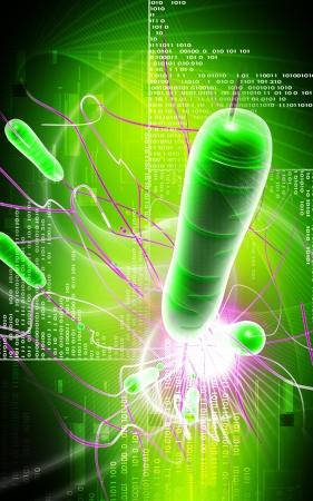 Digital  illustration   of cholera bacteria in   color