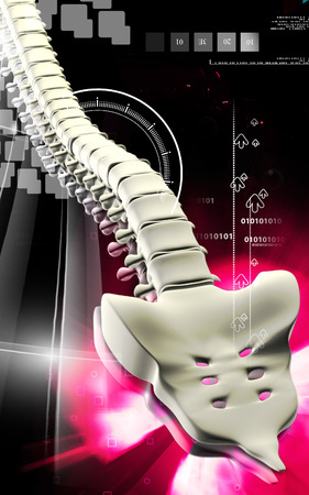 Digital illustration  of back bone in    colour background    illustration