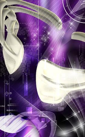 Digital illustration  of collar bone in    colour background    illustration