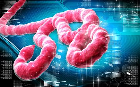virus cell: Digital illustration of Ebola virus in   colour background    Stock Photo