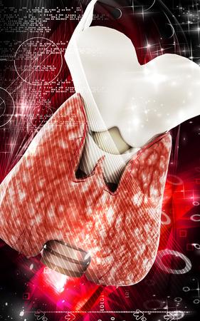 lamina: Digital illustration of  thyroid in colour  background