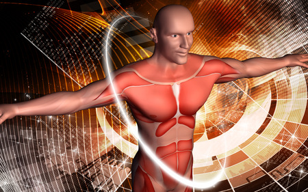 human body: Digital illustration of  human body in colour  background   Stock Photo
