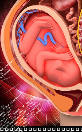 obstetrics: Digital illustration of  Pregnant anatomy with fetus in colour  background