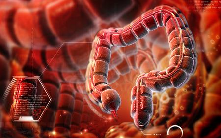 Digital illustration of large intestine in colour background   Stock Photo