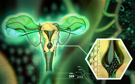 fallopian tubes: Digital illustration of  Uterus  in  colour  background