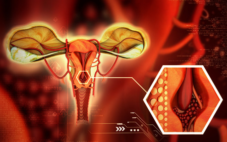 ovary: Digital illustration of  Uterus  in  colour  background