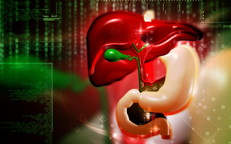 stomach acid: Digital illustration of Liver and stomach in colour  background