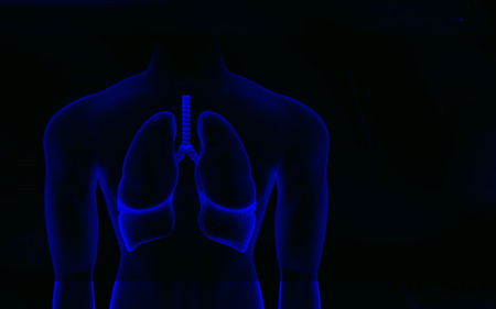 gullet: Digital illustration of Human body and lungs in colour background   Stock Photo