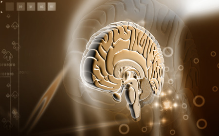 oblongata: Digital illustration of  brain in colour  background