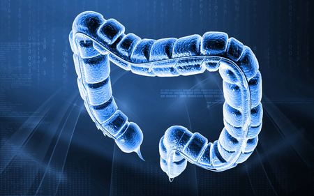 large intestine: Digital illustration of large intestine in colour background Stock Photo