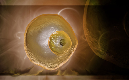 sexual reproduction: Digital illustration of  ovum cell in colour  background