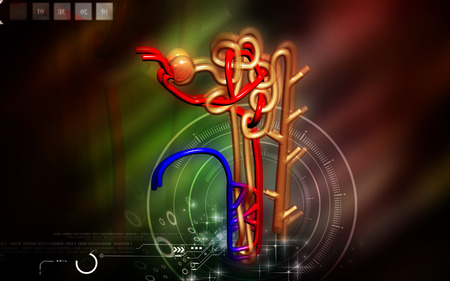 electrolytes: Digital illustration of  nephron   in  colour background