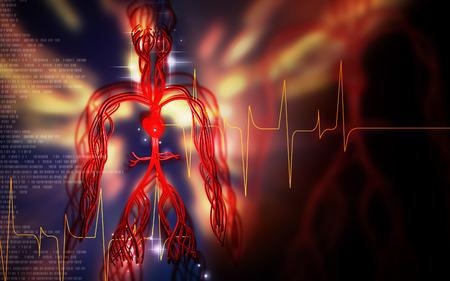 breathing exercise: Digital illustration of vascular system in colour background Stock Photo