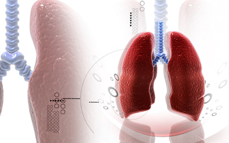 purify: Digital illustration of human lungs in colour background