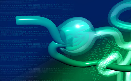 nephron: Digital illustration of  nephron   in  colour background