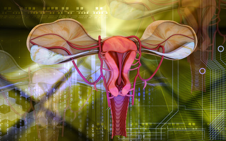 myometrium: Digital illustration of  Uterus  in  colour  background