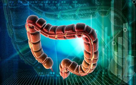 large intestine: Ilustración digital del intestino grueso en el fondo de color Foto de archivo