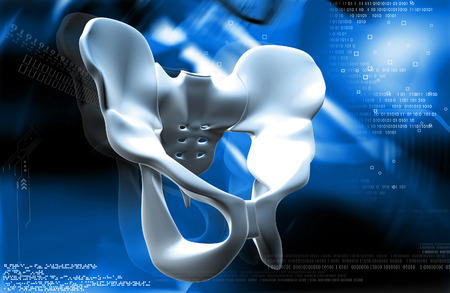 ileum: Digital illustration  of pelvic girdle in    colour background