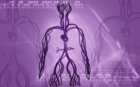 vascular: Digital illustration of vascular system in colour background Stock Photo